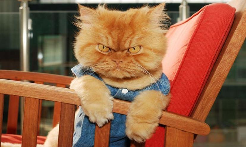 Move Over Grumpy Cat! Meet Garfi, The Grumpiest Cat On The Planet!
