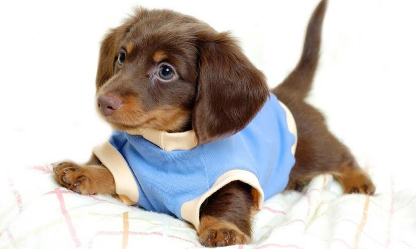 The 8 Cutest Dogs On The Internet! #7 is my favorite!