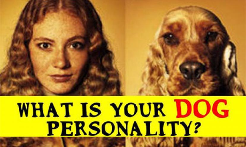Woof! Want to Find Out What Your Dog Personality is? Take the Quiz!