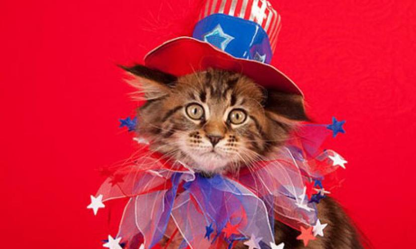 11 Cats That Are More Patriotic Than You Are! God Bless #MEOWICA!
