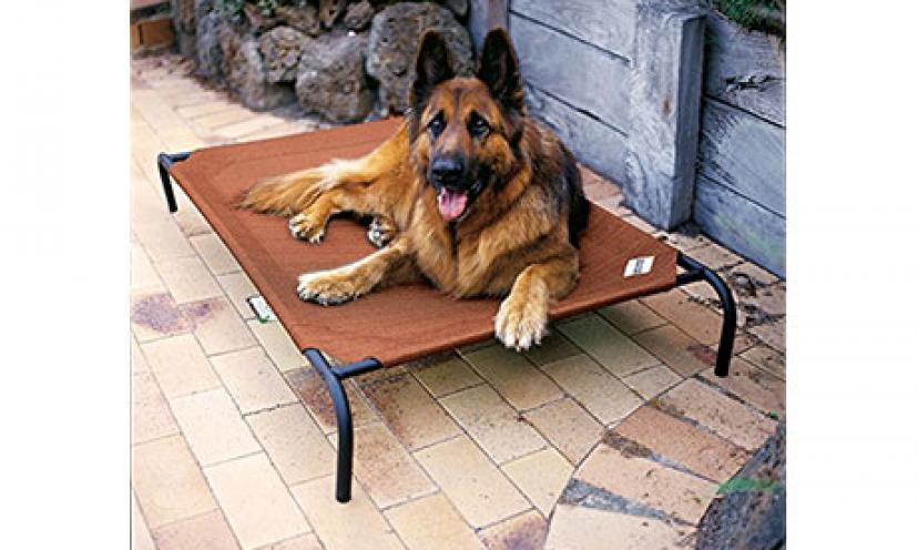 Save 51% Off on Coolaroo Elevated Pet Bed!