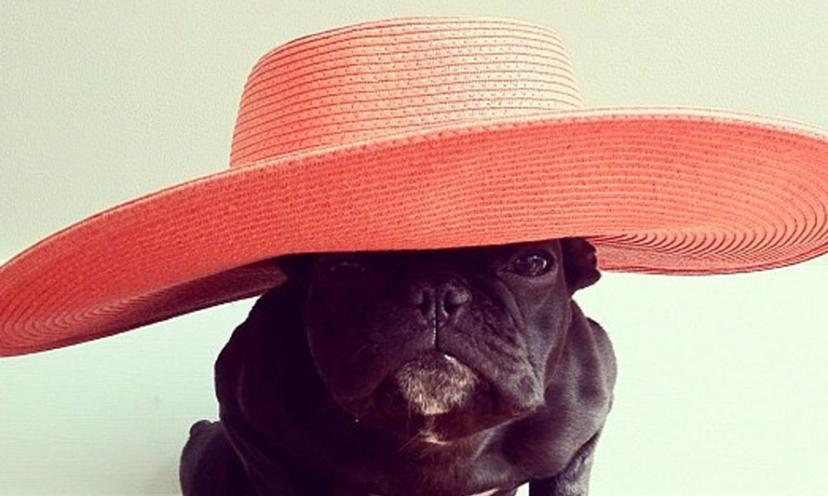 Six Times Trotter The French Bulldog Stole Our Hearts